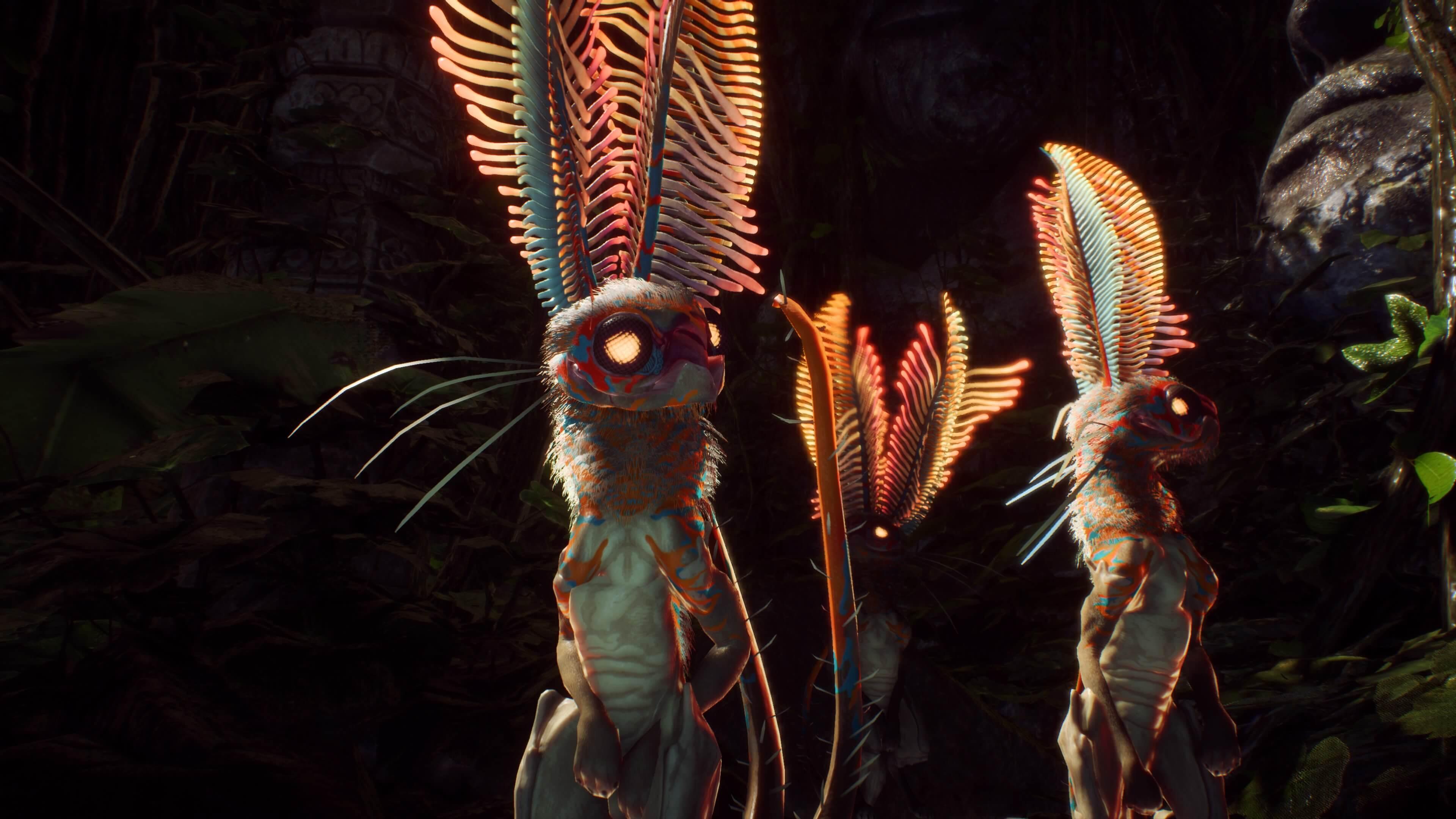 Anthem conejos